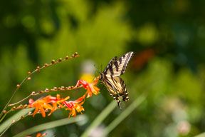 Butterfly on a bright orange flower