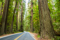 Photo of the road in the redwoods